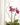 mini orchids1
